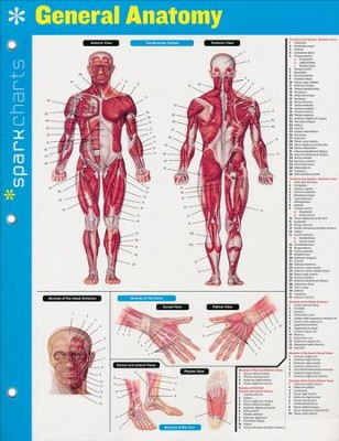 General Anatomy SparkCharts  -     By: SparkNotes