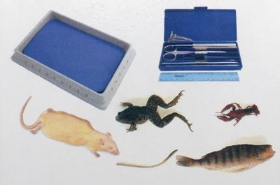 BJU Press Biology Dissection Lab Kit with Specimens   -