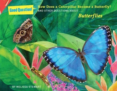 How Does a Caterpillar Become a Butterfly?: And Other Questions about Butterflies  -     By: Melissa Stewart