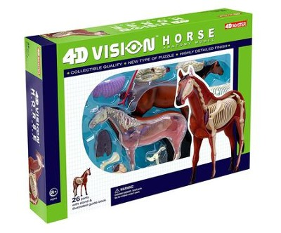 Horse Anatomy Model, 4D Vision  -