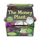 The Money Plant, Mini Dome Terrarium Kit