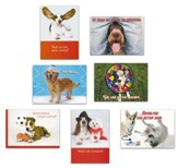 Pets, Assorted Birthday and Get Well Cards, Box of 32
