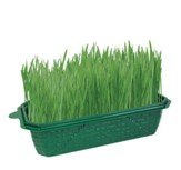 Dog's Delight, Grow Your Own Wheat  Grass