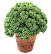 Grow Your Own Organic Veggies, Kale