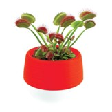 Fearsome Fly Trap Self-Watering  Planter