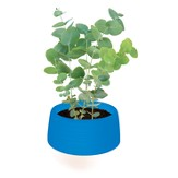 Euphoric Eucalyptus Self-Watering Planter