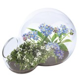 Fragrant Flowers Double Bubble Glass Terrarium