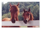 Horse Corral Jigsaw Puzzle, 100 Pieces