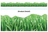 Grass Discovery Trimmer