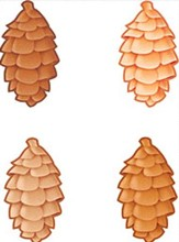 Pinecones Classic Accents Variety Pack