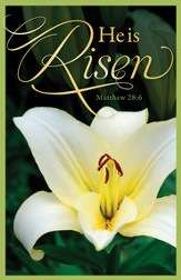 Easter Lily (Matthew 28:6) Bulletins, 100