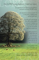 Psalm 23 White Tree, Pack of 50 Bulletins