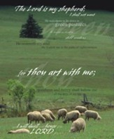 Psalm 23 Sheep and Pine Tree, Pack of 100 Large Bulletins