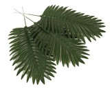 Mighty Fortress VBS: Palm Leaves (Pack of 12)