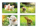 Fur Baby Love (KJV) Box of 12 Encouragement Cards