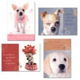 Penitent Pups Belated Birthday Cards, Box of 12