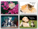Kittens Get Well Cards, Box of 12