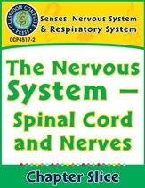 Senses, Nervous & Respiratory Systems: Spinal Cord and Nerves Gr. 5-8 - PDF Download [Download]