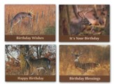 Dream Bucks Birthday Cards, Box of 12