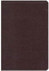NIV Thinline Large-Print Bible, burgundy Thumb-Indexed