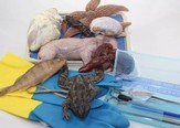 Dissection Kit for A Beka Book Biology (3rd & 4th Editions)