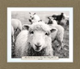 My Sheep Hear My Voice and I Know Them, John 10:27, Framed Art