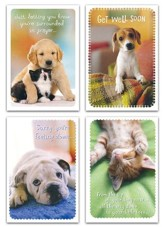 Get Well, Whiskers & Paws Cards, Box of 12