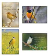 Sympathy, Birds Cards, Box of 12