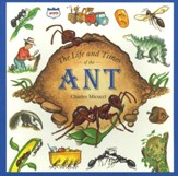 Life And Times Of The Ant