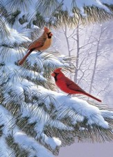 Winter Song, Cardinals Christmas Cards, Box of 16
