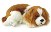 Breathing Pet, Cavalier King Charles