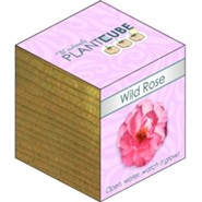 Ecofriendly Plant Cube, Indoor Grow Kit, Wild Rose