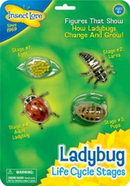 Ladybug Life Cycle Stages Figurines