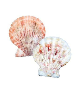 Shipwrecked: Scalloped Seashells (Pack of 120)  -