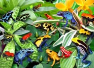 Friendly Frogs, 300 Piece Puzzle   -
