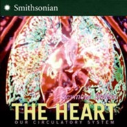 The Heart: Our Circulatory System Revised Edition