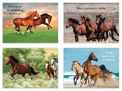 Wild Horses Birthday Cards Box Of 12