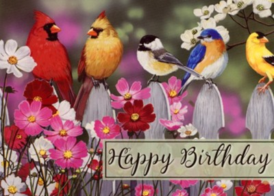 Birds Birthday Cards, Box of 12  -