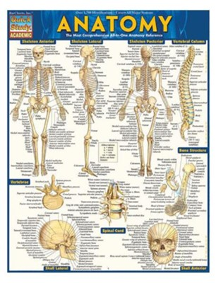 Anatomy, Laminated Guide  -     By: Vincent Perez