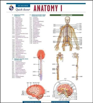Anatomy 1 - Quick Access Reference Chart  -     By: REA Editors