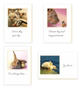 Funny Animals, Encouragement Cards, Box of 12