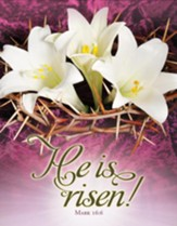 He Is Risen! (Mark 16:6) Tabloid Bulletins, 100
