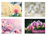 Beautiful Orchids Get Well Cards, Box of 12
