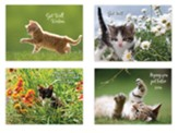 Kittens Playing Get Well Cards, Box of 12