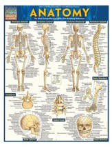 Anatomy, Laminated Guide