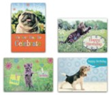 Furry Friends, Birthday Cards, Box of 12