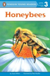 Honeybees All Aboard Science Reader Station Stop 2