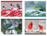 Winter Birds II Christmas Cards, Box of 12
