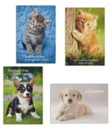 Whiskers and Paws Get Well Cards, Box of 12