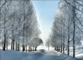 Winter Trail Christmas Cards, Box of 12